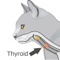 Cat Thyroid